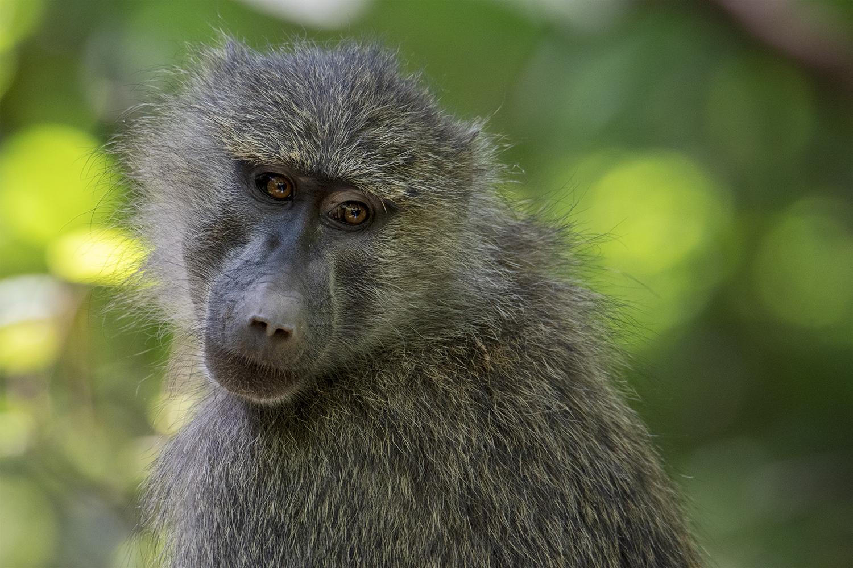 Tanzania_31_m