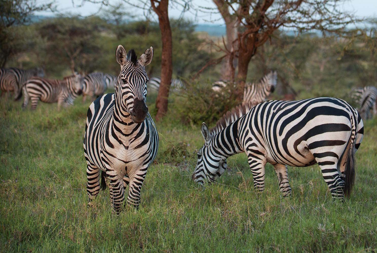 Tanzania_40_m