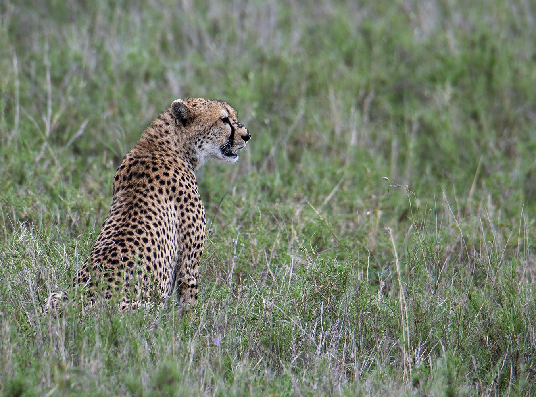 Tanzania_54_m