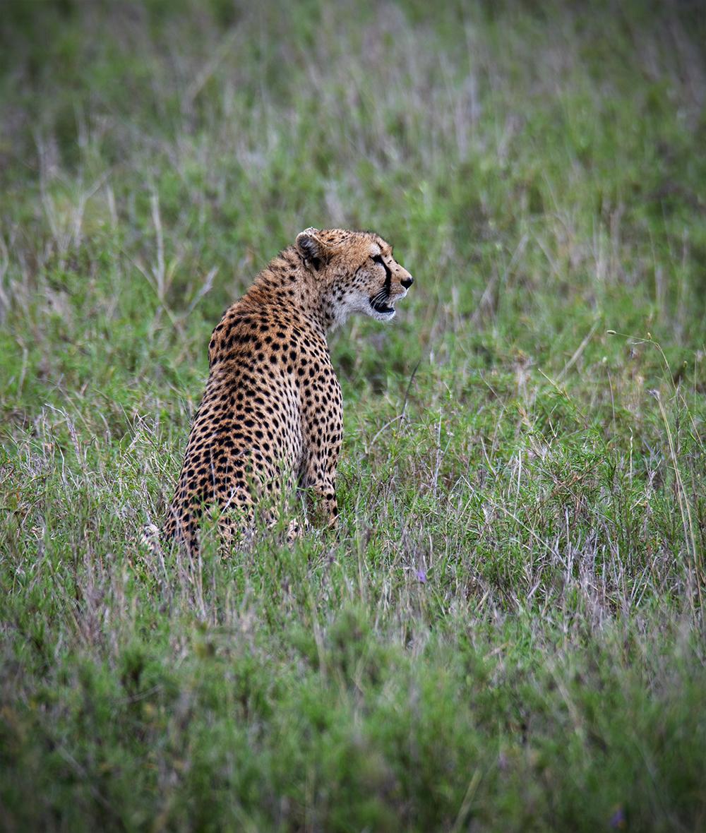 Tanzania_55_m