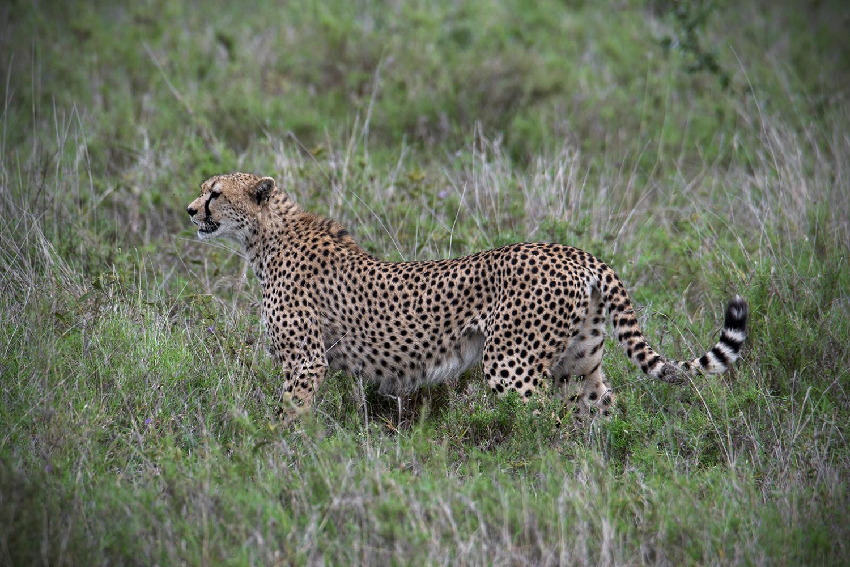 Tanzania_56_m