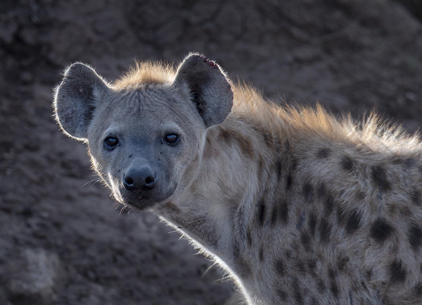 Tanzania_6_m